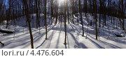 Панорама весеннего леса в контровом свете. Стоковое фото, фотограф Юрий Бажан / Фотобанк Лори