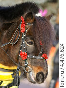 Добрый пони. Стоковое фото, фотограф Юрий Бажан / Фотобанк Лори