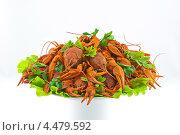 Вареные раки на листьях салат. Стоковое фото, фотограф Вячеслав Ковальчук / Фотобанк Лори
