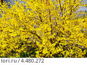 Солнечное дерево. Стоковое фото, фотограф Тарасенко Татьяна / Фотобанк Лори