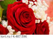 Роза. Стоковое фото, фотограф Конушкина Екатерина / Фотобанк Лори