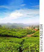 Купить «Горные чайные плантации в Индии», фото № 4502204, снято 1 декабря 2012 г. (c) Михаил Коханчиков / Фотобанк Лори