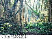 Джунгли. Бали, Индонезия (2013 год). Стоковое фото, фотограф Виктор Застольский / Фотобанк Лори