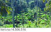 Терраса рисовых полей, Бали, Индонезия (2013 год). Стоковое фото, фотограф Виктор Застольский / Фотобанк Лори