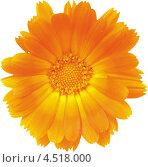 Оранжевый цветок. Стоковая иллюстрация, иллюстратор Александра Шкиндерова / Фотобанк Лори