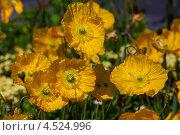 Желтые цветы. Стоковое фото, фотограф light / Фотобанк Лори