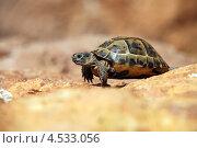 Купить «Черепаха на размытом фоне», фото № 4533056, снято 8 октября 2010 г. (c) Бандуренко Андрей / Фотобанк Лори