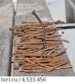 Гвоздь. Стоковое фото, фотограф Александра Полупанова / Фотобанк Лори