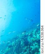 Купить «Подводный пейзаж со стайкой тропических рыбок», фото № 4538064, снято 4 мая 2012 г. (c) Сергей Дубров / Фотобанк Лори