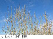 Купить «Весенний фон ветки ивы с почками», эксклюзивное фото № 4541180, снято 9 апреля 2013 г. (c) Елена Коромыслова / Фотобанк Лори