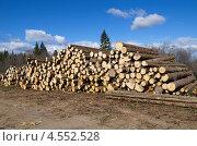 Купить «Сосновые бревна», эксклюзивное фото № 4552528, снято 21 апреля 2013 г. (c) Елена Коромыслова / Фотобанк Лори