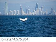 Купить «Хвост кита на фоне городского пейзажа. Золотое побережье, Австралия», фото № 4575864, снято 19 ноября 2018 г. (c) Nadya Pyastolova / Фотобанк Лори