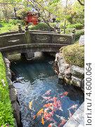 Купить «Пруд с оранжевыми карпами на территории храма Sensoji, Асакуса, Токио, Япония», фото № 4600064, снято 10 апреля 2013 г. (c) Кекяляйнен Андрей / Фотобанк Лори