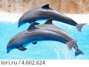 Купить «Прыгающие дельфины. Водное шоу», фото № 4602624, снято 17 апреля 2013 г. (c) Иван Михайлов / Фотобанк Лори