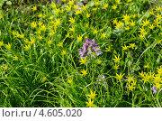 Купить «Фон из весенних цветов», эксклюзивное фото № 4605020, снято 8 мая 2013 г. (c) Елена Коромыслова / Фотобанк Лори