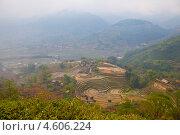 Рисовые поля в провинции Лаокай, Вьетнам (2013 год). Стоковое фото, фотограф Светлана Мамина / Фотобанк Лори