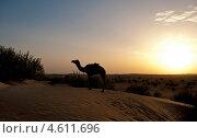 Верблюд на закате. Стоковое фото, фотограф Юлия Деденок / Фотобанк Лори