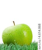 Купить «Крупно зеленое яблоко с каплями влаги на траве», фото № 4614868, снято 9 марта 2011 г. (c) Wavebreak Media / Фотобанк Лори