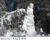 Причуды зимнего леса. Стоковое фото, фотограф Елена Камнева / Фотобанк Лори