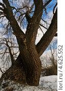 Большое старое дерево зимой. Стоковое фото, фотограф Юрий Селиванов / Фотобанк Лори