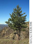 Купить «Сосна на горной вершине», фото № 4630596, снято 28 апреля 2013 г. (c) Игорь Веснинов / Фотобанк Лори