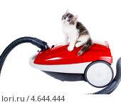 Милый пушистый котенок на красном пылесосе. Стоковое фото, фотограф Ирина Кожемякина / Фотобанк Лори