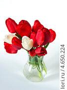 Тюльпаны в кувшине. Стоковое фото, фотограф Короленко Елена / Фотобанк Лори