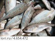 Купить «Черноморский морской окунь,в большом количестве», фото № 4654472, снято 1 мая 2013 г. (c) Робул Дмитрий / Фотобанк Лори
