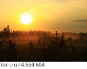 Закат в лесу. Стоковое фото, фотограф Алла Лузгина / Фотобанк Лори