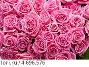 Купить «Розовые розы», фото № 4696576, снято 19 марта 2013 г. (c) Jan Jack Russo Media / Фотобанк Лори