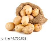 Купить «Картофель в мешочке на белом фоне», фото № 4730832, снято 26 апреля 2013 г. (c) Andrey Eremin / Фотобанк Лори