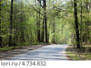 Асфальтированная дорога в весеннем лесу. Стоковое фото, фотограф Ольга Корбут / Фотобанк Лори
