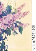 Купить «Букет из цветущей сирени», фото № 4741808, снято 10 мая 2013 г. (c) Юлия Маливанчук / Фотобанк Лори