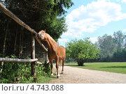 Купить «Конный двор в Национальном парке «Лосиный остров», Москва», эксклюзивное фото № 4743088, снято 1 августа 2012 г. (c) lana1501 / Фотобанк Лори