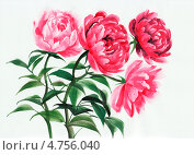 Купить «Четыре розовых пиона. Акварель», иллюстрация № 4756040 (c) Вероника Суровцева / Фотобанк Лори