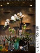 Растущая орхидея в горшочке. Стоковое фото, фотограф Slava Pozdnyakov / Фотобанк Лори