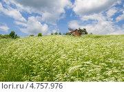 Купить «Летний сельский пейзаж», эксклюзивное фото № 4757976, снято 14 июня 2013 г. (c) Елена Коромыслова / Фотобанк Лори