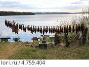 Рыба вялится на свежем воздухе. Стоковое фото, фотограф Вадим Бахир / Фотобанк Лори