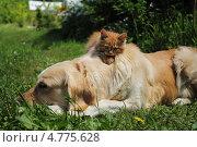 Котенок на спине у собаки. Стоковое фото, фотограф Копылова Ольга Васильевна / Фотобанк Лори