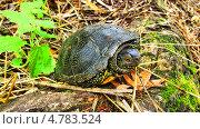 Черепаха. Стоковое фото, фотограф Дмитрий Горбик / Фотобанк Лори