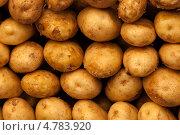 Купить «Фон из свежего картофеля», фото № 4783920, снято 23 мая 2011 г. (c) Glen_Cook / Фотобанк Лори