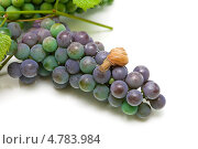 Купить «Улитка на винограде», фото № 4783984, снято 3 августа 2012 г. (c) Ласточкин Евгений / Фотобанк Лори