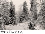 Купить «Зимний еловый лес», фото № 4784596, снято 4 января 2007 г. (c) Сергей Александров / Фотобанк Лори
