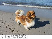 Купить «Верный пес ждет хозяина у моря», эксклюзивное фото № 4786316, снято 11 июня 2013 г. (c) Ната Антонова / Фотобанк Лори