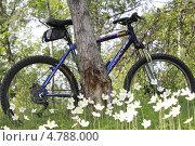 Велосипед (2013 год). Редакционное фото, фотограф Ворошилова Анна / Фотобанк Лори