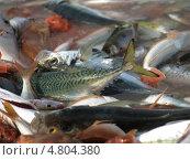 Рыба для рыбного супа буайбес на рынке Марселя (2009 год). Стоковое фото, фотограф Александр Элеазер / Фотобанк Лори