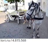Лошадь с каретой. Стоковое фото, фотограф Рустам Гилязутдинов / Фотобанк Лори