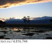 Байкал. Два дерева на закате. Стоковое фото, фотограф Евгений Осадчий / Фотобанк Лори