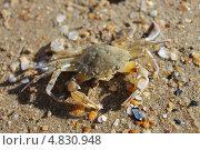 Купить «Маленький краб на песке», фото № 4830948, снято 30 мая 2013 г. (c) Иван Тимофеев / Фотобанк Лори