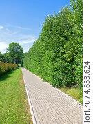 Купить «Аллея в парке, стена из зеленых насаждений», фото № 4833624, снято 7 июля 2013 г. (c) Ласточкин Евгений / Фотобанк Лори
